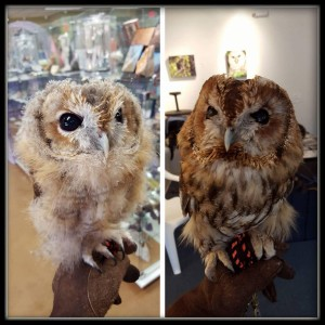 Owl rescue donations