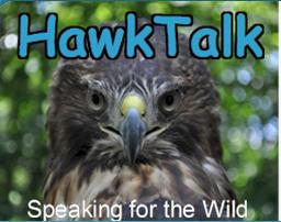 Hawk Talk